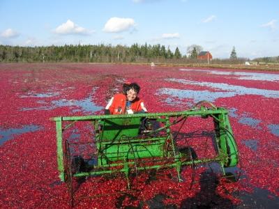 Terra Beata Farms