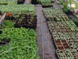 Bob & The Boys Farm Market